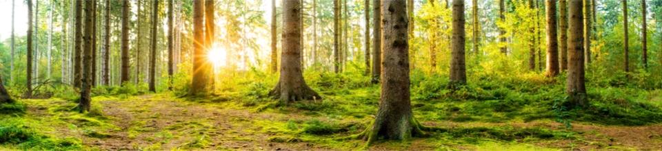 Ecosysteemdiensten en milieueffectrapportage in ruimtelijke ontwikkelingsprocessen