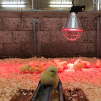 Climate and energy-neutral poultry house
